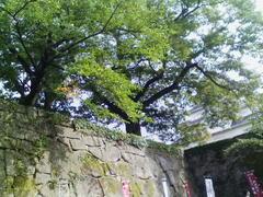 Isigaki