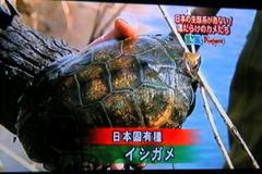 Kamenokiki05