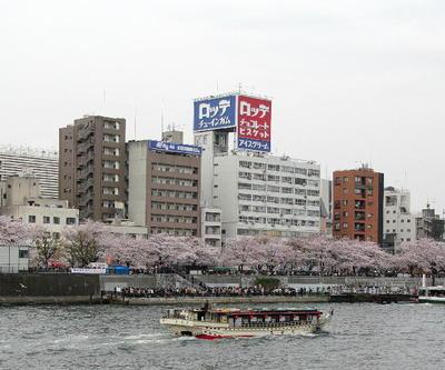 Asumidanosakura01