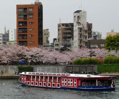 Asumidanosakura03