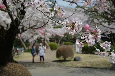 Asiroyamakouen02