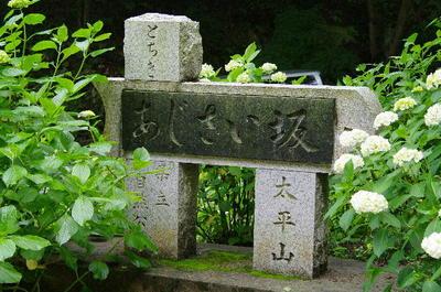 Ajisaizaka03