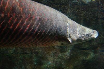 Atansuigyo02