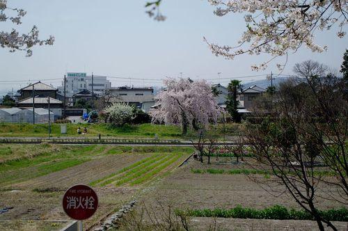 Asaishuu04
