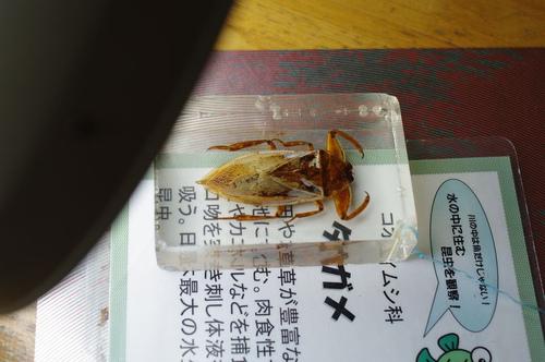Anakagawa10_2