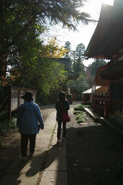 Aochanohana02