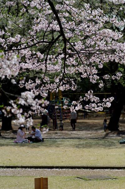 Asiroyamakouen03