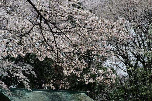 Asiroyamakouen05