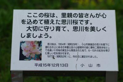 Aomoigawazakuranosatooya01