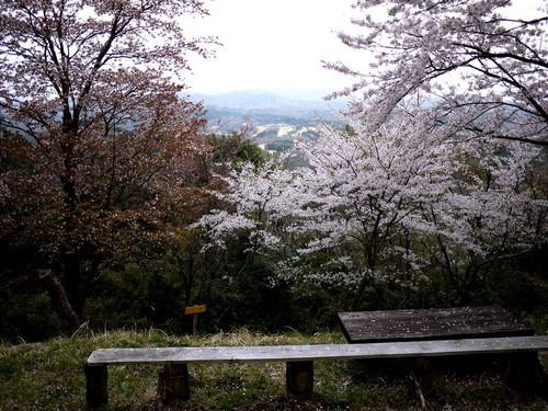 Asantyounosakura01
