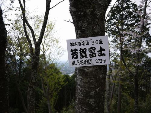 Asantyounosakura03
