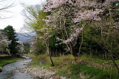 Asiobarahoukigawa05
