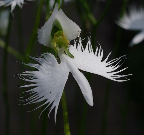 Akanumanosagisou04