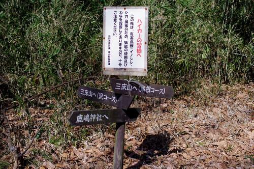 Aonekousu01