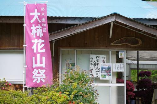 Aoogakihanayama01