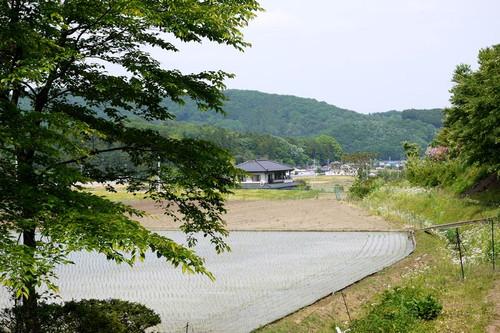 Asaigohanayama05