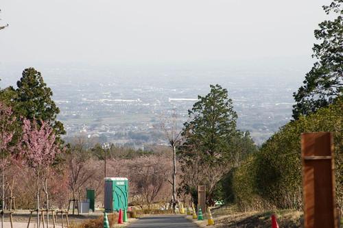 Asakuranamiki04