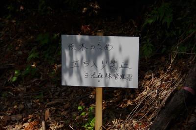 Anemotoyamatozankuti04