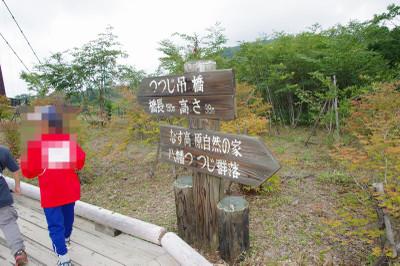 Aookinakaeru03