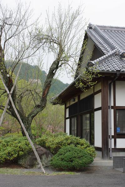 Asatozakura05_2