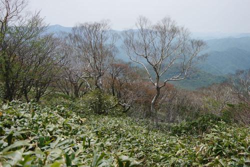 Aatosankiro06_2
