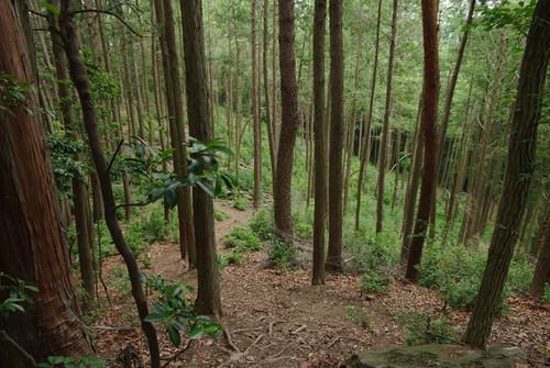 Atadaomi01