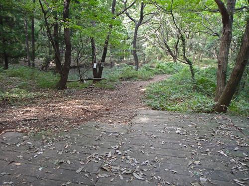 Amikamoyama03