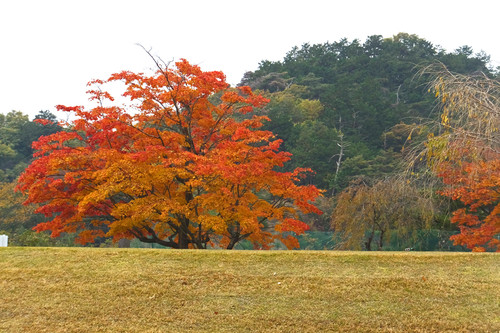 Aomoigawa04